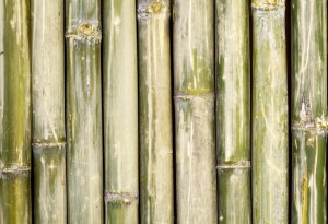 "Bamboo Fabric ""Isn't it rough?"""